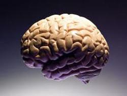Эксперименты на мозге