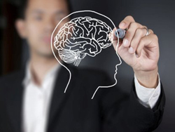 Мужской мозг