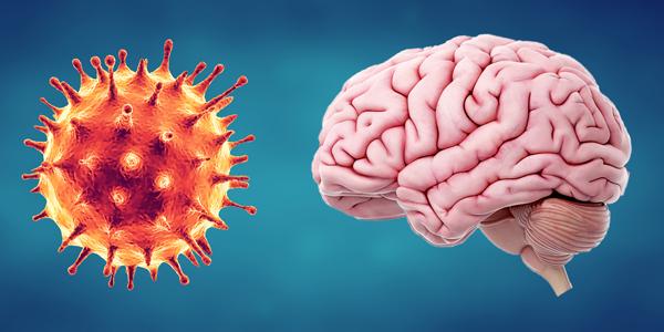 влияние covid 19 на мозг