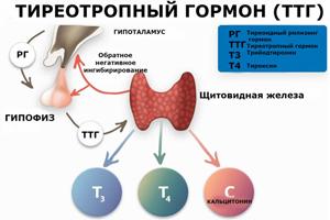 Анализ на ТТГ